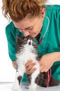 Stock Photo of Veterinary with kitten