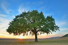 Alone tree - stock photo