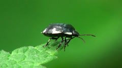 Brown Bug insect macro Stock Footage