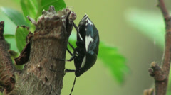 Black Bug insect macro Stock Footage