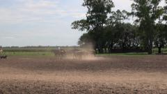 Argentine Estancia horses in dust editorial s Stock Footage