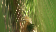 Stock Video Footage of Snail creeps web  in forest