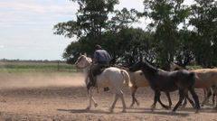 Argentine Estancia horses editorial Stock Footage