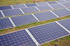 Aurinkopaneelien ruoho Kuvituskuvat