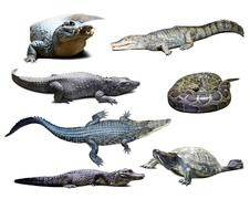 reptiles over white  with shade - stock photo