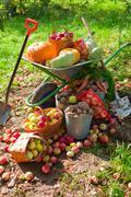 Crop of vegetables in the garden Stock Photos