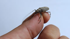 Finger holding beetle Stock Footage