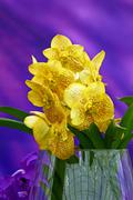 Stock Photo of Yellow orchid in glass vase on violet background