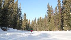 Alaska Trees Snow Skiers Stock Footage
