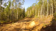 Stock Video Footage of Alaska Forrest ATV
