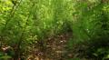 On a forest footpath.. Steadicam shot  like animal HD Footage