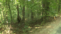 Wide shot of hickory saplings in the woods Stock Footage