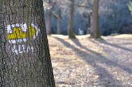 Stock Photo of tourist trail with yellow sign on the tree