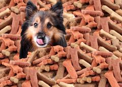 Sheltie and dog biscuits - stock illustration