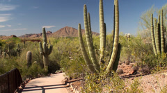 Hiking Guy at the Desert Botanical Garden. Phoenix, Arizona, USA. Stock Footage