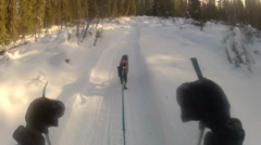 Snow Dog Pulls Skier Stops Stock Footage