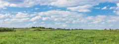 Stock Photo of Field and sky