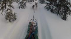 Snow Dog Sled Mushing Stock Footage