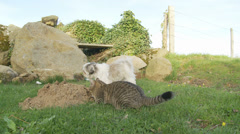 A mole hill attracts attention from cat & dog Stock Footage