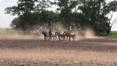 Argentine Estancia horses editorial 3s Stock Footage