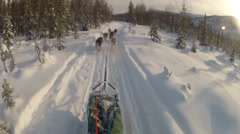 Snow Dog Sled Mushing Pets - stock footage
