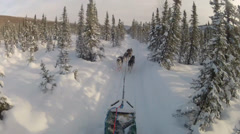 Snow Dog Sled Mushing Stock Footage