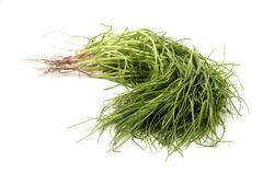 opposite leaved saltwort - stock photo