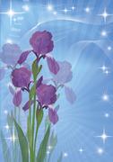 Flowers iris for holiday design Stock Illustration