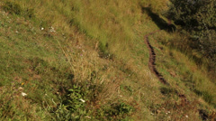 Path in a sunny glade - stock footage