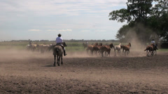 Argentine Estancia horses editorial 5s Stock Footage