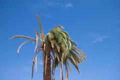Palm-tree Stock Photos