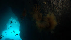 Underwater cave.Algae float in the blue water Stock Footage