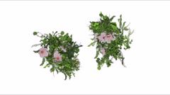 Flying bunches of flowers on a white background Stock Footage