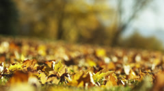 CU R/F Autumn leaves in park / Provo, Utah, USA - stock footage