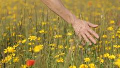 Hand touching Grass and flowers Stock Footage