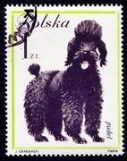 Dog on Polish postmark - stock photo