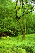 Lush forest - stock photo