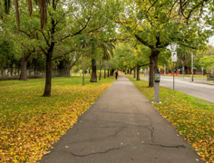 4K, autumn fall, walking in the park of Melbourne, Stock Footage