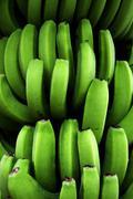 Close up shot of a banana bunch Stock Photos