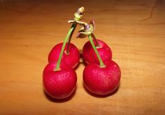four ripe cherries - stock photo