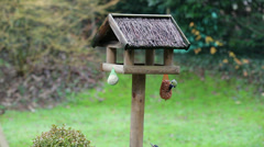 Great spotted woodpecker - bird table - Multicam Stock Footage