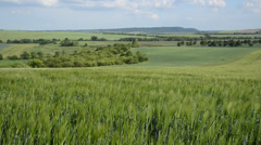 Summer landscape with barley field in the wind, locked down Stock Footage