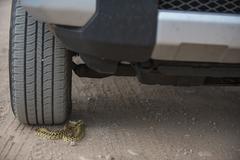 Gopher snake under the wheel of a car Stock Photos