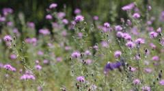 Slider through flower field Stock Footage