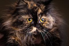 Fluffy cat Stock Photos