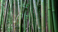 Bamboo grove in Haleakala 2 Stock Footage