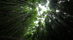Creaking bamboo canopy Haleakala 9 Stock Footage