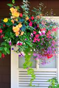 Blooming flowers decorate esterior Stock Photos