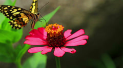 Butterfly and Nature Stock Footage
