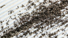 The ants work together on the ground close-up Stock Footage